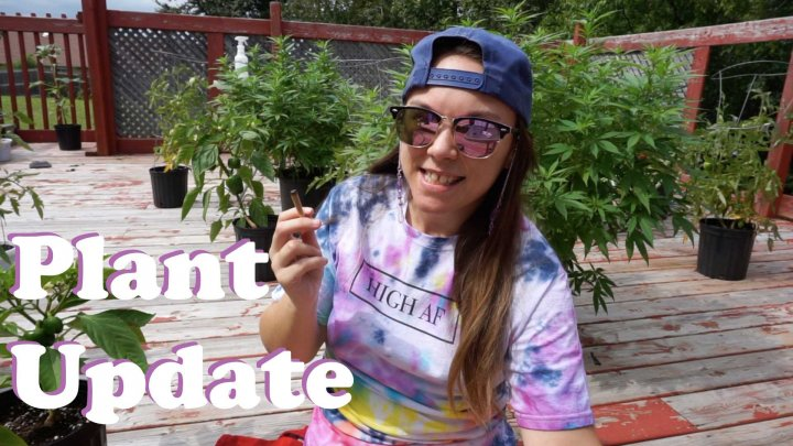 DECK SESH | Pot Plant & Garden Update - August 2020