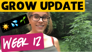 Grow Update Week 12 *They are budding!!* |Brittany Allison