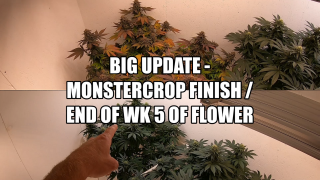 Big Update / Monstercrop Finish / WK 5 Flower / Mars Hydro SP 250