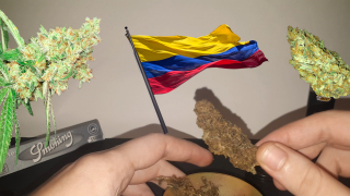 O famoso Colombian Gold !!