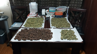 twtgc, harvest update and the reset