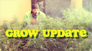 Grow Update with SilkySlim416