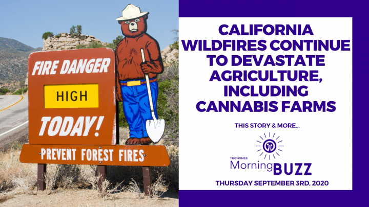 CALIFORNIA WILDFIRES CONTINUE TO DEVASTATE AGRICULTURE INCLUDING CANNABIS | TRICHOMES Morning Buzz