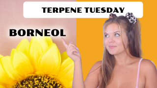 Borneol Terpene Effects | Terpene Tuesday (Epi 15)