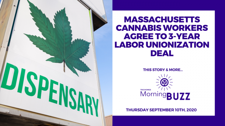 MASSACHUSETTS CANNABIS WORKERS AGREE TO 3-YEAR LABOR UNIONIZATION DEAL | TRICHOMES Morning Buzz