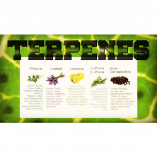 Terpenes are important