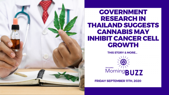 GOV'T RESEARCH IN THAILAND SUGGESTS CANNABIS MAY INHIBIT CANCER CELL GROWTH   TRICHOMES Morning Buzz