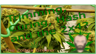 Trimming Curing and Hash | GSCE End of Week 8 | Next Run is Ready! | TWTGC