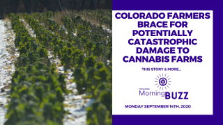 COLORADO FARMERS BRACE FOR CATASTROPHIC DAMAGE TO CANNABIS FARMS | TRICHOMES Morning Buzz