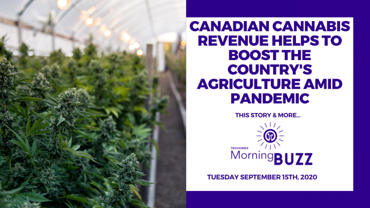 CANADIAN CANNABIS REVENUE HELPS TO BOOST AGRICULTURE AMID PANDEMIC | TRICHOMES Morning Buzz