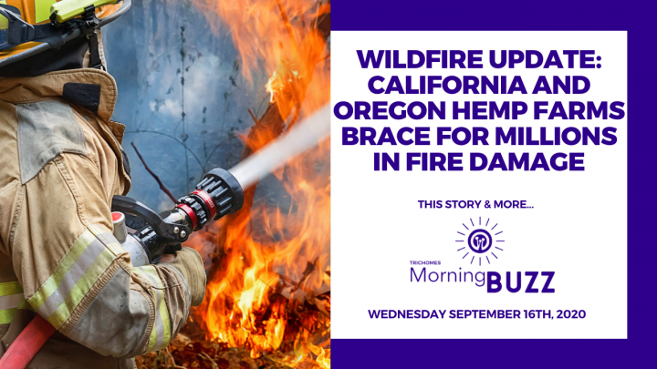 WILDFIRE UPDATE: CALIFORNIA & OREGON FARMS BRACE FOR MILLIONS IN FIRE DAMAGE  TRICHOMES Morning Buzz