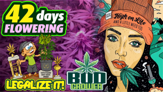 Flowering Cannabis Garden + BREAK DOWN THE WALLS (Iya Terra)