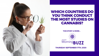 DATA REVEALS WHERE IN THE WORLD CANNABIS RESEARCH HAS BEEN MOST WIDESPREAD | TRICHOMES  Morning Buzz