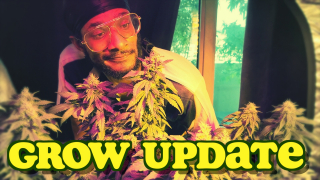 Week 10 of Flower - Grow Update with SilkySlim416