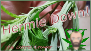 HERMIE DOWN! | COMPLETE GARDEN UPDATE | TWTGC | MARS HYDRO CUP