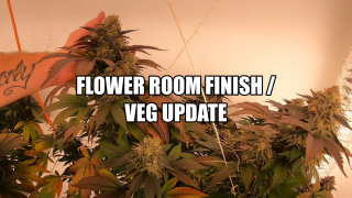 Flower Room Finish / Veg Update / Mars Hydro SP 250