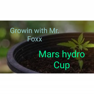 Growing with Mr Foxx MarsHydro Cup