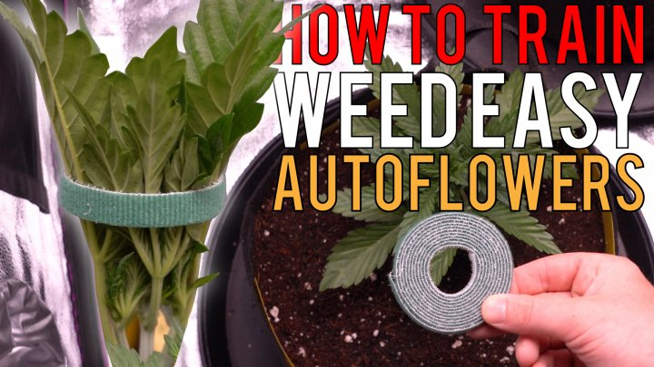 HOW TO GROW WEED EASY (AUTOFLOWERS)... JUST ADD WATER! DETAILED TRAINING GUIDE FOR BEGINNERS EP2