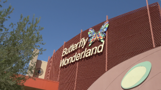 Butterfly Wonderland (Scottsdale Arizona)
