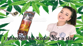 I smoke like Koala Puffs for a day | StrugglinStoner