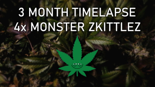 DIY Automated Garden, Timelapse Growing Weed, Monster Zkittlez (3 month period)