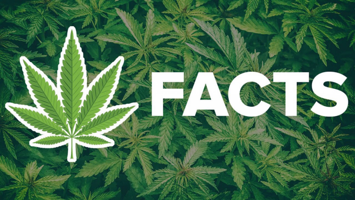 FAQ'S ABOUT WEED FROM A STONER