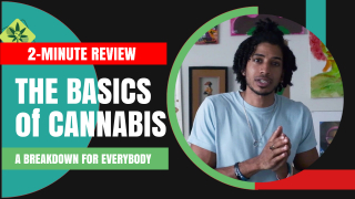 2-Minute Review: The Basics of Cannabis