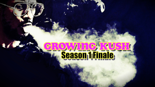 GROWING KUSH Season 1 Finale; Clone Cutting Tutorial,Transplanting, Germinating Seeds
