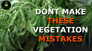 Don't Make These MISTAKES from Seed to VEG - First Grow Week 2