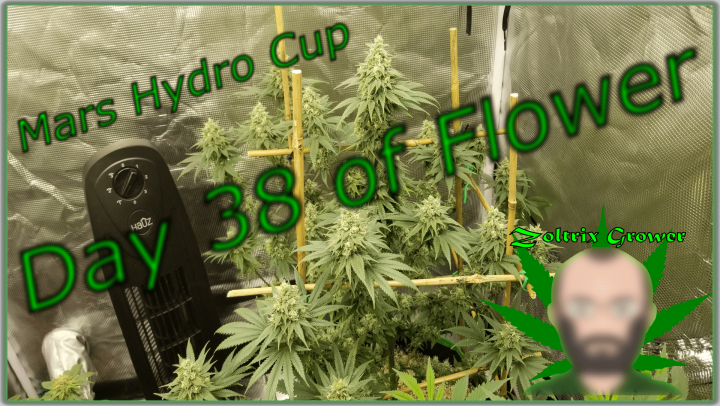 Day 38 of Flower Garden Update | New Product | Mars Hydro Cup | TWTGC