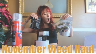 ALL NEW STRAINS // November Weed Haul