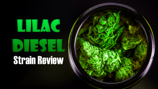 LILAC DIESEL STRAIN REVIEW