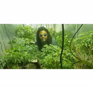 tour of the grow room  and announcement  of flower Twtgc