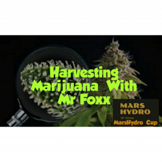 harvest Time With Mr Foxx ( MarsHydro Cup  )