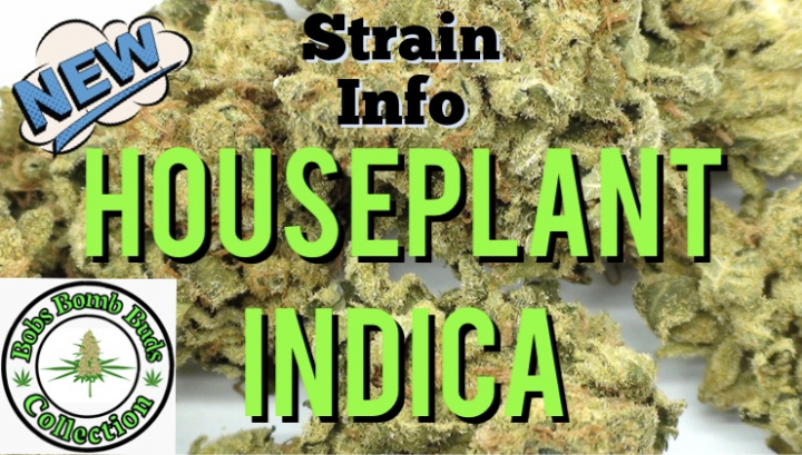 House Plant Indica