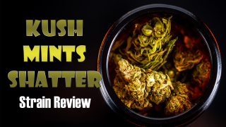 Kush Mints Shatter Strain Review By: Cali Strain