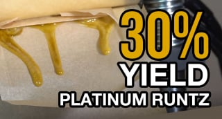 Pressing Home Grown Platinum Runtz - My New Rosin Press