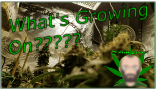 What's Growing On???? | Day 60 and Still Growing! | Mars Hydro Cup