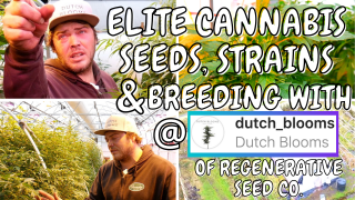 Cannabis Seed Breeding Dropping Elite Seeds w/@dutchblooms - Strain Hunting