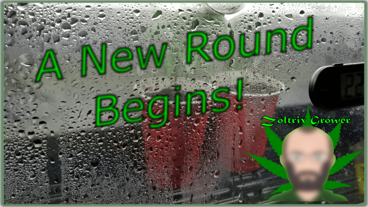 Another Run Done, Another Run Started! | Post Harvest Reset | Seeds, Clones and Transplants