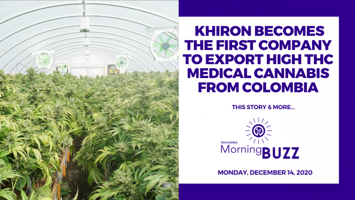 Khiron Becomes the First Company to Export High THC Cannabis from Colombia | TRICHOMES Morning Buzz