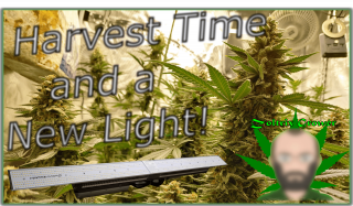 Harvest Time! | New Light!?!? | Last Harvest of 2020 Right Around the Corner!