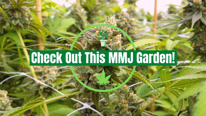 Another Medical Marijuana Garden Tour