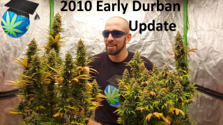 10 Yr Old Early Durban Journal UPDATE - Wk 5 Flowering - Ft FC4800