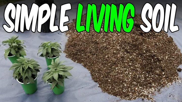 Making a Living Soil for Growing Cannabis OG Kush Ep.1