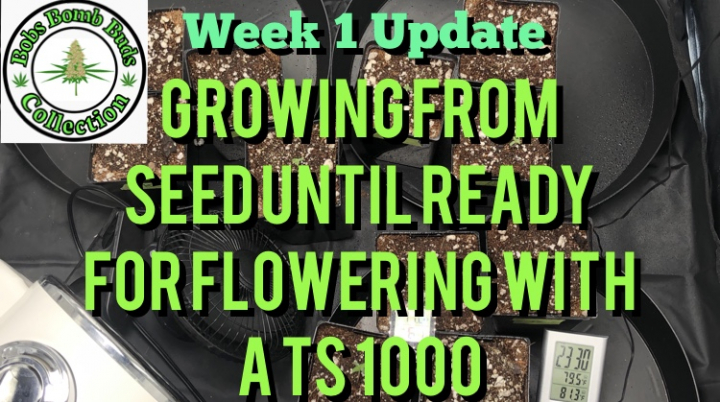 Week 1 Update, Growing From Seed Until Ready For Flowering Under A Mars Hydro TS 1000