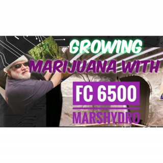 Growing marijuana with FC-6500 MarsHydro