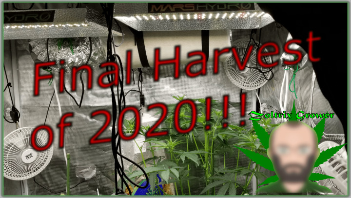 Ending 2020 With My 9th Harvest! | A Look At My First Year of Growing | Grown With Mars Hydro