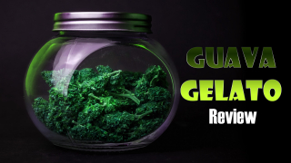 Guava Gelato Strain Review By: OG Cough