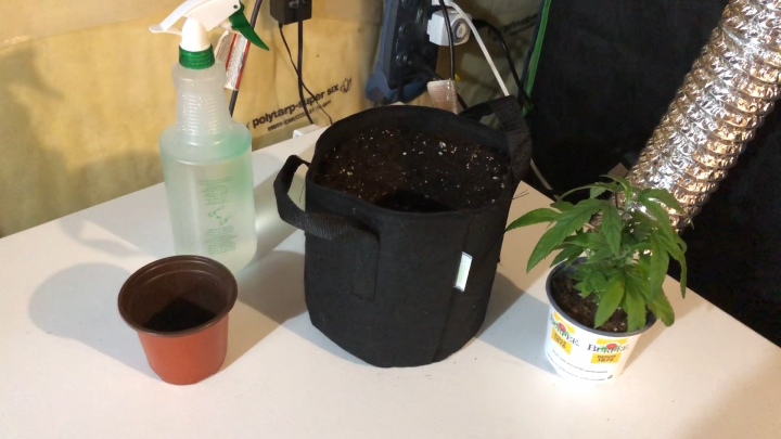 How To Transplant  - For Beginners